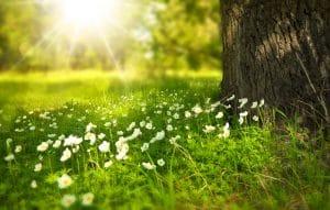 CBDenzo zon vitamine D natuur bloemen