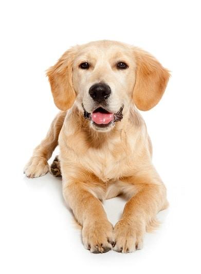 CBdenzo cbd honden 4% Dutch Hemp